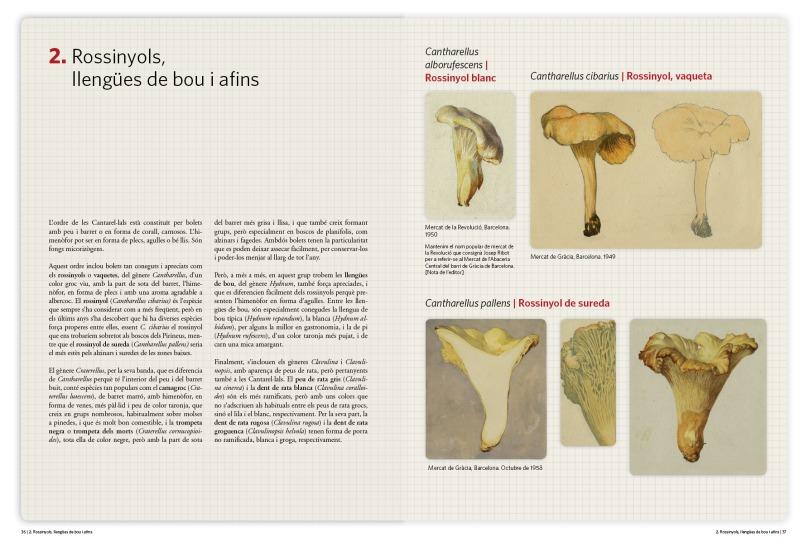 album_micologia_p36-371